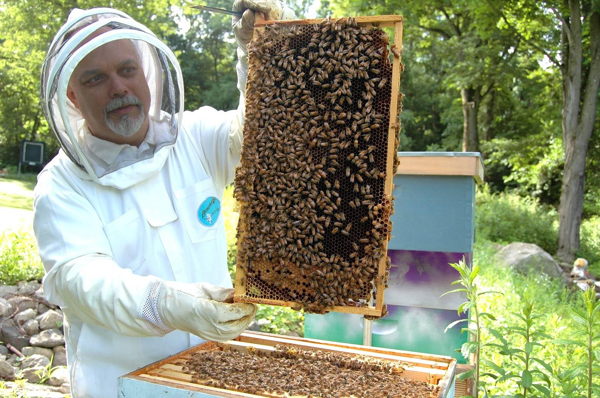 Wie Lange Hält Honig